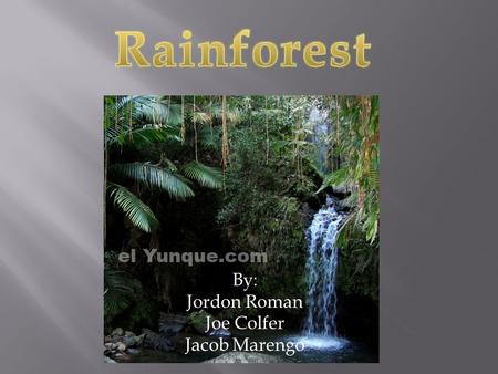 By: Jordon Roman Joe Colfer Jacob Marengo.  masterxela.wordpress.com  student.gsu.edu  elyunque.com  www.nashua.edu/novakc/ rainforest /rain weather.