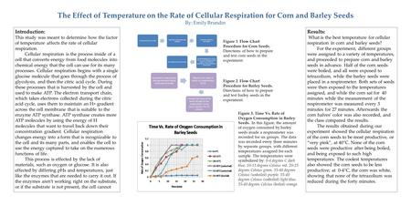 how does temperature affect respiration rates Lab activity: how does temperature affect the rate of  respiration rates will typically increase as  how does temperature affect the rate of respiration in.