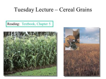Tuesday Lecture – Cereal Grains Reading: Textbook, Chapter 5.