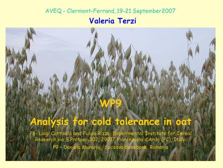 WP9 Analysis for cold tolerance in oat P8- Luigi Cattivelli and Fulvia Rizza, Experimental Institute for Cereal Research,via S.Protaso 302, 29017 Fiorenzuola.