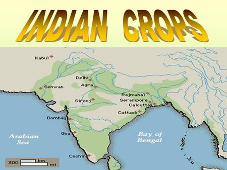 Indian is an agricultural country. Most of her people are farmers. They produce generally three classes of crops, such as food- crops, commercial crops.