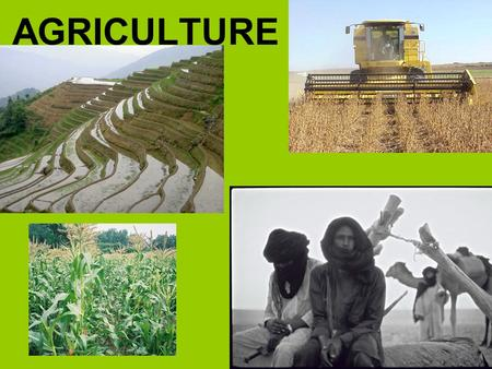 AGRICULTURE. Origins of Agriculture When humans domesticated plants and animals for their use AgricultureAgriculture - deliberate modification of the.