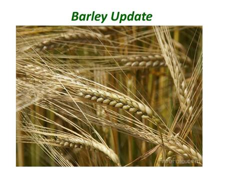 Barley Update. Barley Supply & Demand Table U.S. Barley 2010/2011(Est.)2011/2012(Feb)2011/2012(Mar) Planted A. 2.87 Mill. A.2.56 Mill. A. Harvested A.