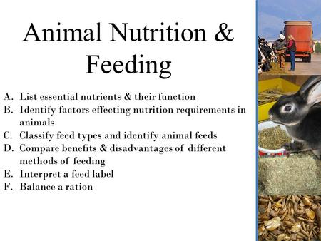 Why Is Understanding Animal Nutrition Important Ppt