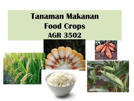 Tanaman Makanan Food Crops AGR 3502. What are food crops? Any domesticated or wild species of any plant parts that are used for human or animal consumption.