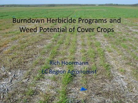 Burndown Herbicide Programs and Weed Potential of Cover Crops Rich Hoormann EC Region Agronomist.