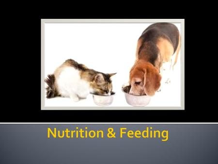  Nutrition  Process by which animals receive a proper and balanced food and water ration so it can grow, maintain its body, reproduces, and perform.