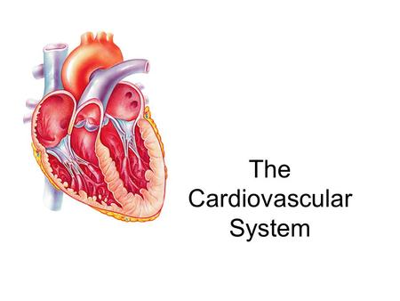 The Cardiovascular System. A closed system of the heart and blood vessels –The heart pumps blood –Blood vessels allow blood to circulate to all parts.