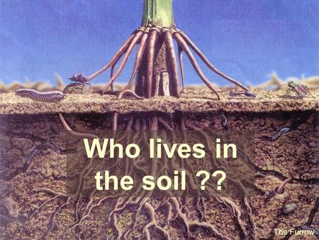 Who lives in the soil ?? The Furrow.