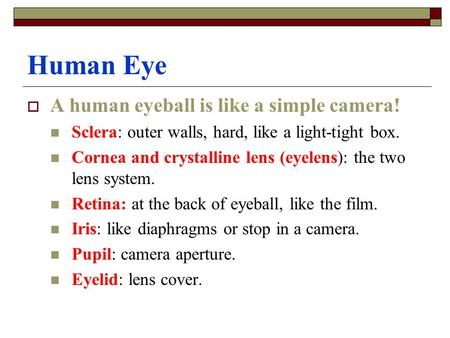 Human Eye  A human eyeball is like a simple camera! Sclera: outer walls, hard, like a light-tight box. Cornea and crystalline lens (eyelens): the two.