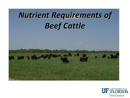 Nutrient Requirements of Beef Cattle. Theorem of the 7 P's Prior Proper Preparation Prevents Poor Production Performance.