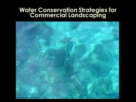 Water Conservation Strategies for Commercial Landscaping.