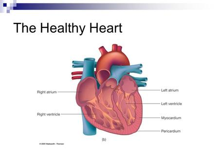 The Healthy Heart. Chambers of the Heart Right Atrium Receives blood through the superior and inferior vena cava. Left Ventricle Pumps blood rich in oxygen.