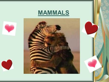 MAMMALS. All mammals have two notable features: hair and mammary glands. -In females, mammary glands produce milk to nourish the young. In addition to.