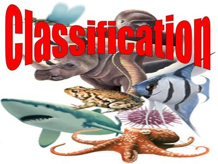 Essential Question How are animals classified? Vocabulary to know: Classification Vertebrate Invertebrate.