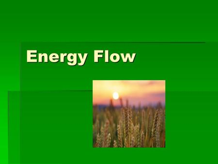 Energy Flow. Who eats what in an ecosystem?  Ecosystems are structured by who eats whom. A trophic level is the position that an organism occupies in.