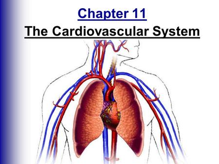 Chapter 11 The Cardiovascular System. The Cardiovascular System  A closed system of the heart and blood vessels -heart pumps blood -blood vessels - circulate.