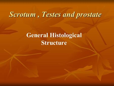 Scrotum , Testes and prostate