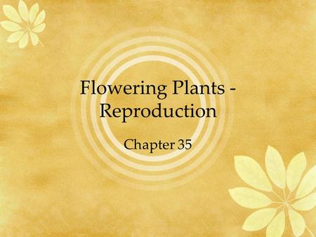 Flowering Plants - Reproduction