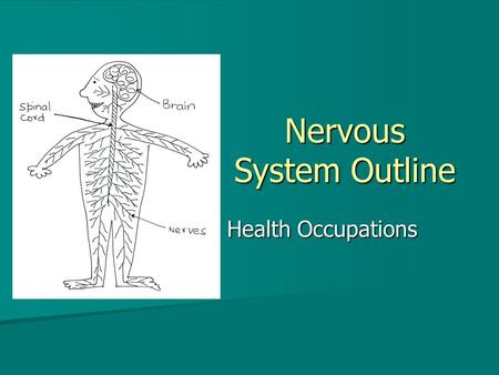 Nervous System Outline Health Occupations. Nervous System Functions Directs the functions of all human body systems Directs the functions of all human.