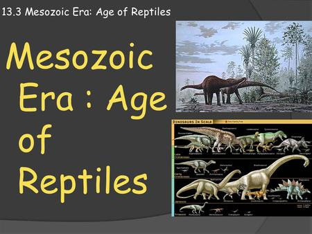 13.3 Mesozoic Era: Age of Reptiles Mesozoic Era : Age of Reptiles.
