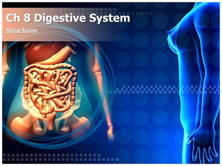 Ch 8 Digestive System Structures. Digestive System AKA alimentary canal  Aliment means to nourish  -ary means pertaining to Responsible for Intake &