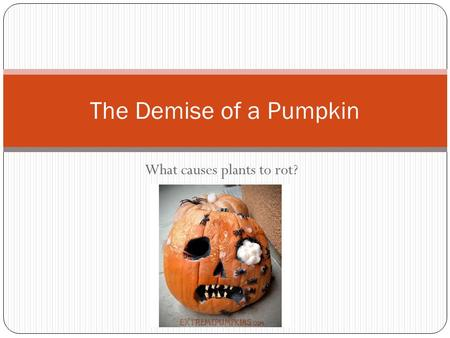 What causes plants to rot? The Demise of a Pumpkin.