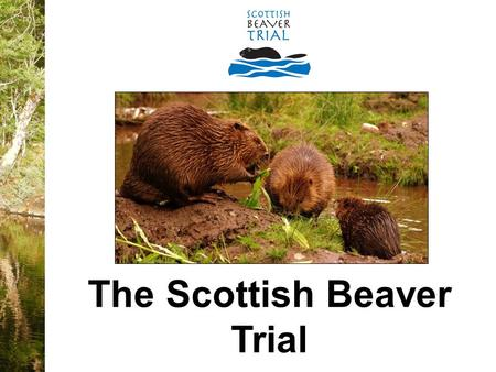 The Scottish Beaver Trial. o Largest rodent in Europe - can grow up to 1.4metres in length o Can live for up to 15 years o Herbivorous – only eat plants.