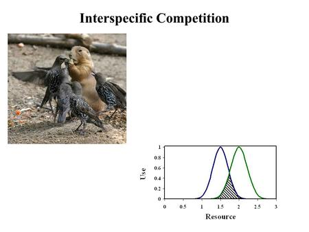 Interspecific Competition. The niche and interspecific competition Resource Use Species A Species B Competition When niches overlap, competition results.