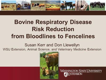 Bovine Respiratory Disease Risk Reduction from Bloodlines to Fencelines Susan Kerr and Don Llewellyn WSU Extension, Animal Science, and Veterinary Medicine.