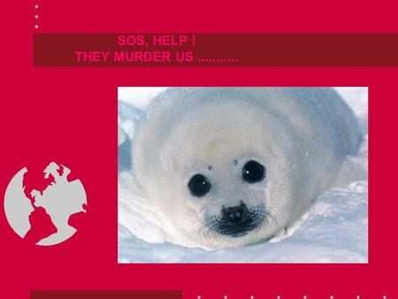 SOS, HELP ! THEY MURDER US........... IN CANADA THEY HAVE A NEW FORM OF TOURISM, IN NORWAY THE SAME: TO KILL US.