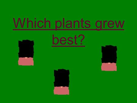 Which plants grew best?. We grew the cress in cups. How did we make it fair? We used three cups all the same size.