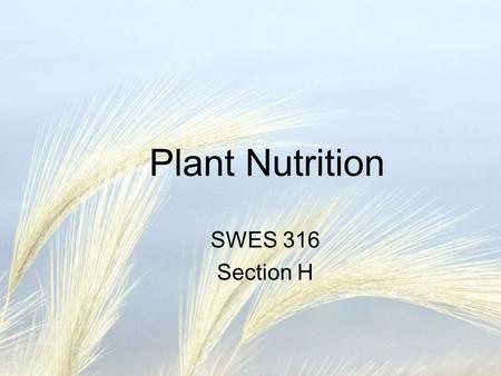Plant Nutrition SWES 316 Section H. What Do Plants Need to Grow? Van Helmont early 1600s –Grew a tree in 200# of soil for 5 years, gave it only water.
