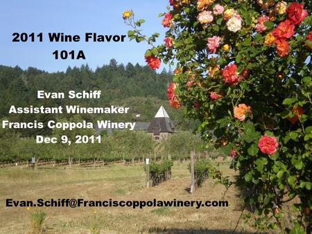 2011 Wine Flavor 101A Evan Schiff Assistant Winemaker Francis Coppola Winery Dec 9, 2011