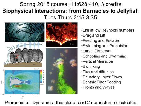Spring 2015 course: 11:628:410, 3 credits Biophysical Interactions: from Barnacles to Jellyfish Tues-Thurs 2:15-3:35 Life at low Reynolds numbers Drag.