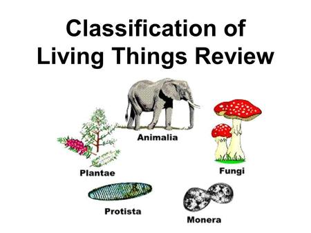 Classification of Living Things Review