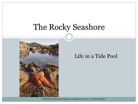 The Rocky Seashore Life in a Tide Pool MARE/Rocky Seashore/Seashore Charades/University of California©2002.