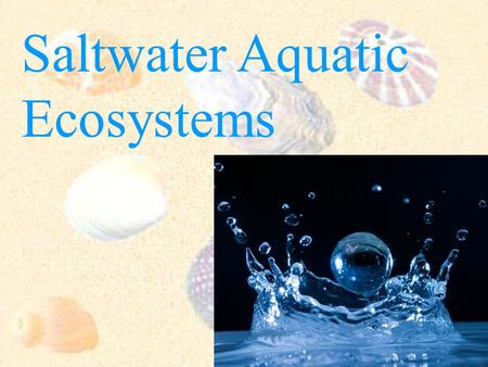 Saltwater Aquatic Ecosystems