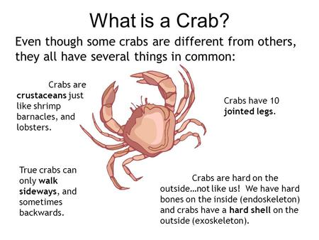 What is a Crab? Even though some crabs are different from others, they all have several things in common: Crabs have 10 jointed legs. Crabs are hard on.