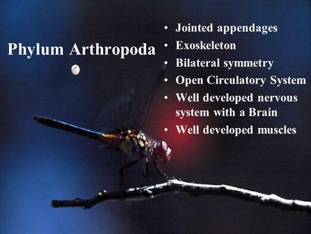 Phylum Arthropoda Jointed appendages Exoskeleton Bilateral symmetry Open Circulatory System Well developed nervous system with a Brain Well developed muscles.