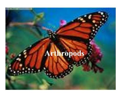 Arthropods. What are ARTHROPODS? Coelomate Segmented Bilateral Symmetry Exoskeleton – made of protein and chitin Jointed appendages – any structure (leg.