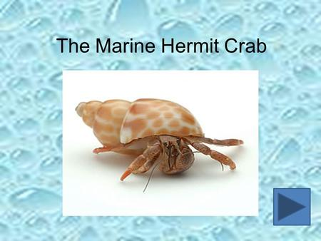 The Marine Hermit Crab. Introduction During this lesson, you are going to investigate one creature that can be found in the rock pools of our coast, the.