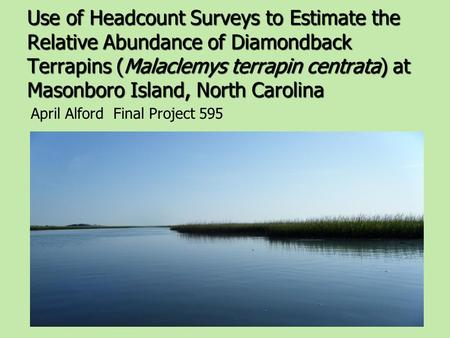 Use of Headcount Surveys to Estimate the Relative Abundance of Diamondback Terrapins (Malaclemys terrapin centrata) at Masonboro Island, North Carolina.