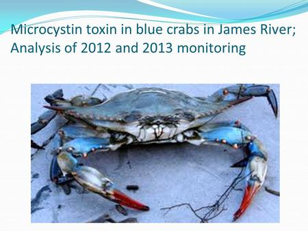 Microcystin toxin in blue crabs in James River; Analysis of 2012 and 2013 monitoring.
