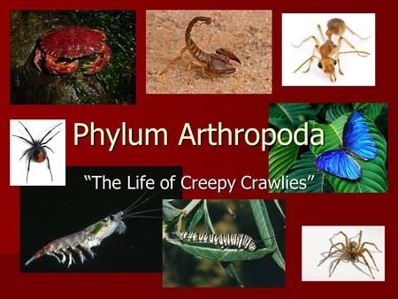 "Phylum Arthropoda ""The Life of Creepy Crawlies"". Arthropod: General Characteristics 1) Jointed appendages 1) Jointed appendages (arthro = joint; poda."