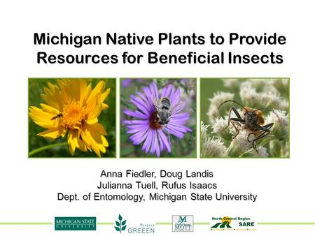 Michigan Native Plants to Provide Resources for Beneficial Insects Anna Fiedler, Doug Landis Julianna Tuell, Rufus Isaacs Dept. of Entomology, Michigan.