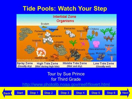 StartStop 2Stop 3Stop 4Stop 5Stop 6Stop 1Next Back Tour by Sue Prince for Third Grade  Tide Pools: Watch.