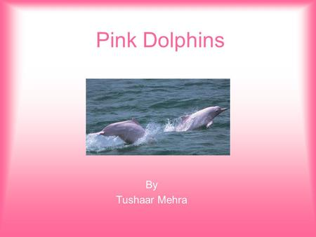 Pink Dolphins By Tushaar Mehra. Pink Dolphins are found in the Western parts of the Hong Kong Map of Pink Dolphins in Hong Kong West part of Hong Kong.