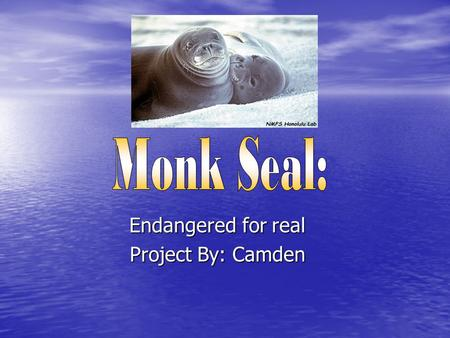 Endangered for real Project By: Camden. The Hawaiian Monk Seal eats:  Lobsters  Octopuses  Eels  Fish  crustaceans.
