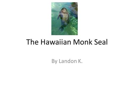 The Hawaiian Monk Seal By Landon K.. Hawaiian Monk Seal It's called a Monk Seal because it's folds of fat look like a monks hood.